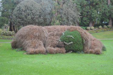 Photo d'un ours taillé dans des plantes