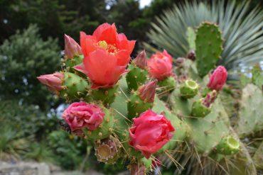 Photo d'un cactus en fleurs