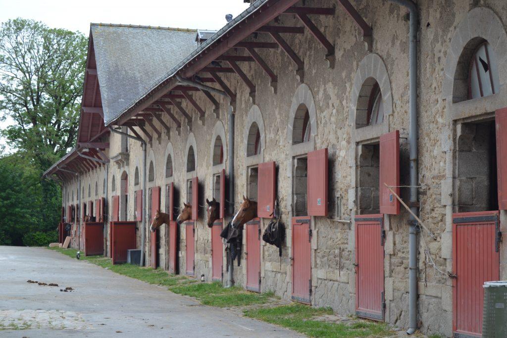 Photo d'une des écuries dont les portent donnent sur l'extérieur, donc plusieurs chevaux ont leur tête à l'extérieur