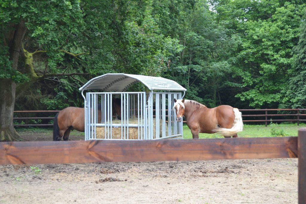 Photo de deux chevaux à l'extérieure qui mangent du foin